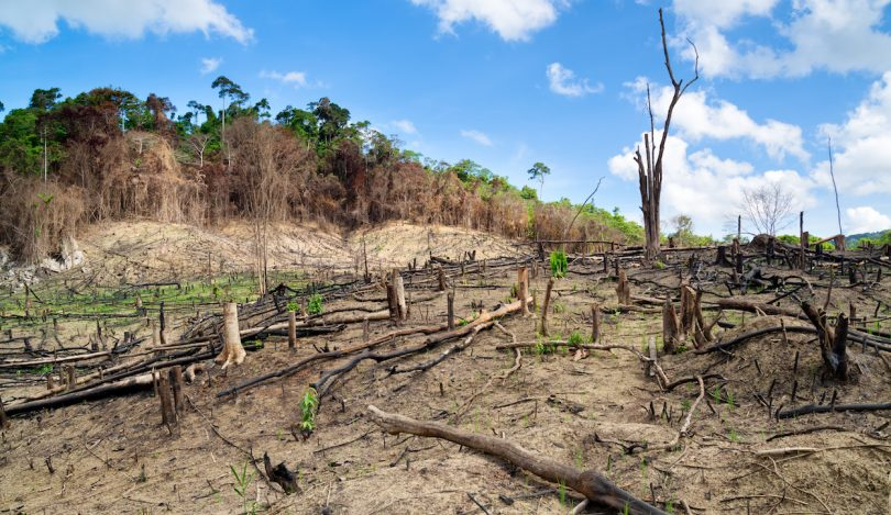 deforestation-810x469
